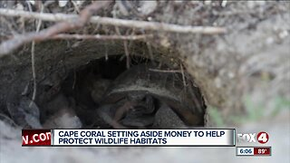 Cape Coral creates $100K fund to protect local wildlife