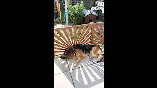 Lovely puppy Toby