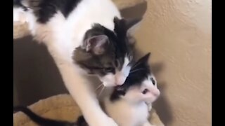 😹Cute cats and baby Pets And Funny Animals Compilation