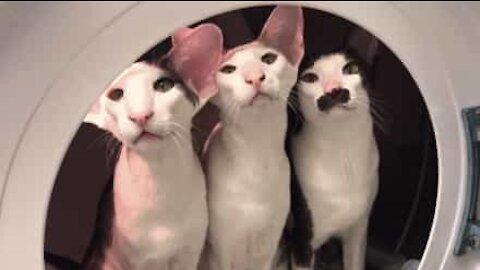 Hulvaton video: kissat leikkivät astronautteja pesukoneessa!