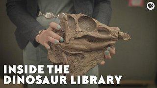 Inside the Dinosaur Library