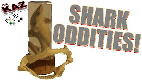 Baby Shark in a Bottle and Jaws Oddities