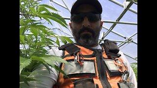Building a huge tier one cannabis farm