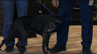 Idaho Humane Society: Lila
