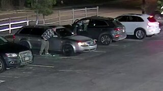 Surveillance video shows car thieves targeting Audis in body shop parking lot