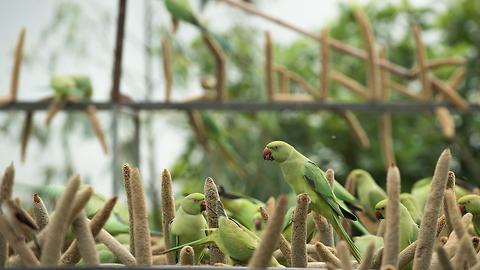 The 'Birdman' Of Gujarat Feeds Thousands Of Birds Every Day