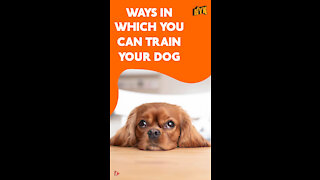 Top 4 Ways To Train Your Pet Dog *