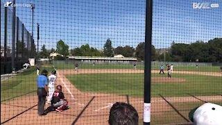 Un pigeon fait les frais d'un match de baseball