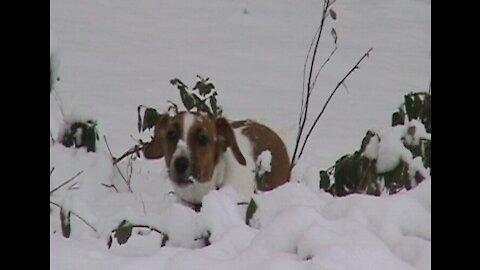 Gypsy, Loopy and Olive go for a romp in the snow.