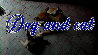 dog and cat LOVERS