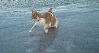 Katta får skikkelig noia på isen