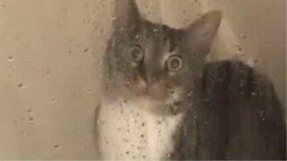 Katten paralysert av skrekk i dusjen