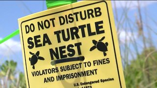 Sea Turtle Nests Vandalized at State Park