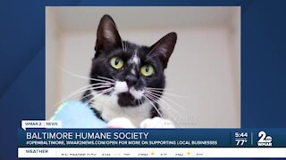 Cher the cat is up for adoption at the Baltimore Humane Society