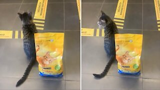 Obedient cat perfectly follows social distancing rules