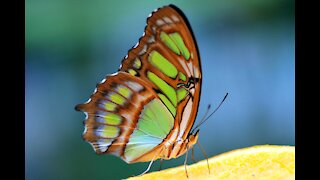 A butterfly in nature 2