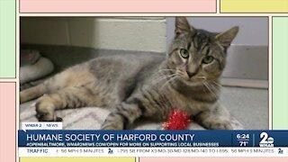 Humane Society of Harford County