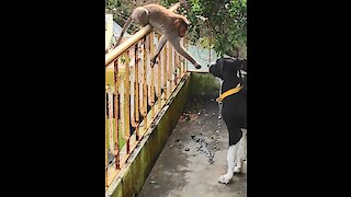 Monkey shook hands with Great Dane and instantly made him a lifelong friend