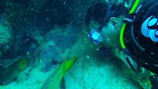 Diver has extreme close encounter with giant moray eels
