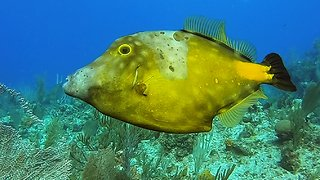 Unusual fish eats and changes color right before your eyes