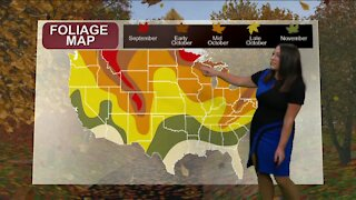 Breaking it Down with Brittney - Fall Colors