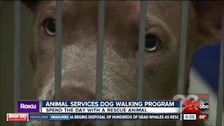 New animal services program