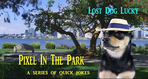 Pixel In The Park...Lost Dog