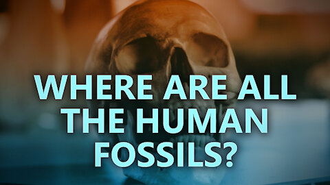 Where are all the human fossils?