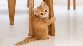 Funny Cute Cats Video Compilation 2021
