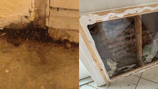 Polk County condo owners claim homes are infested with mold