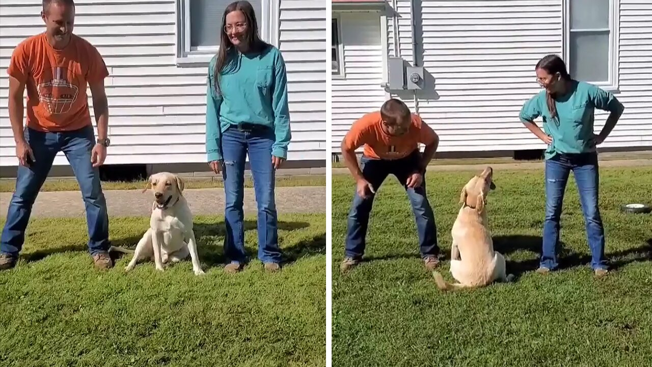 Dog clearly prefers mom to dad in hilarious experiment