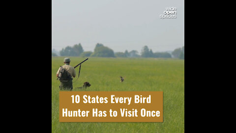 10 States Every Bird Hunter Has to Visit Once