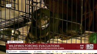 Arizona Humane Society helping care for evacuated pets