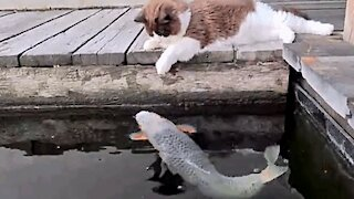 This cat loves to watch these big fish while they swim