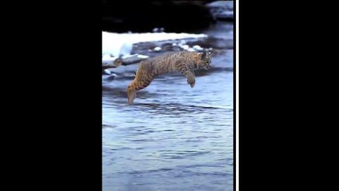 Tiger Cub Jump most Viral Animals Video