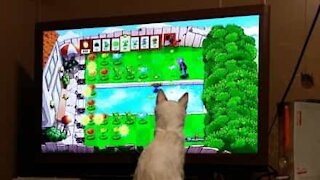 Will this kitten become a TV addict?