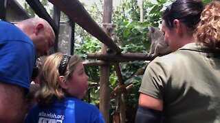 Remembering Oz: Chronically ill girl's wish granted to see koalas