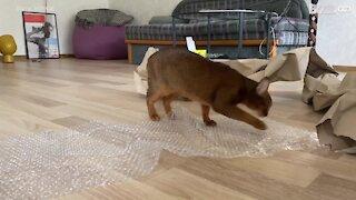 Cat blissfully bursts bubble wrap