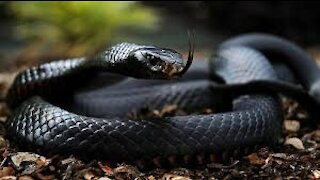 The 10 most dangerous snakes in the world