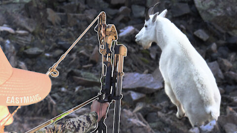Mountain Goat with a Bow - Backcountry Hunting with Horses