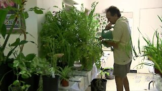 Clearwater Garden Club sells plants virtually to raise money