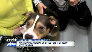 Riley wants a forever home at SPCA Serving Erie County