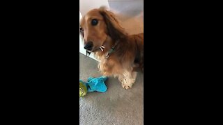 What are the odds this dog ate the toilet paper?