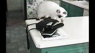 Cat Burglar Steals Money from Purse