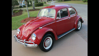 1967 Volkswagen Beetle for Sale