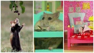 Viaje pelo mundos dos hamsters e deixe-se roer por mais!