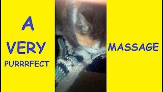 Purrrrrrrrrfect Cat Massage