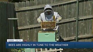 Oklahoma Beekeeping
