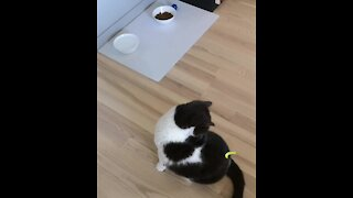 Owner pranks cat by sticking a piece of paper on its lower back