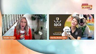 Pet Patrol: SPCA Tampa Bay | Morning Blend